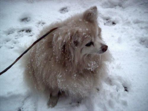 Marigold_snow3
