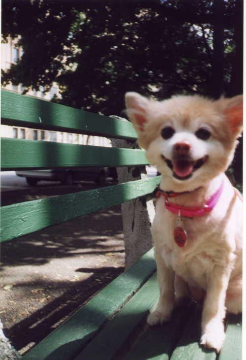 Marigold_trim_on_bench