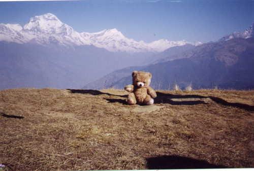 Annapurna_pensive_bear